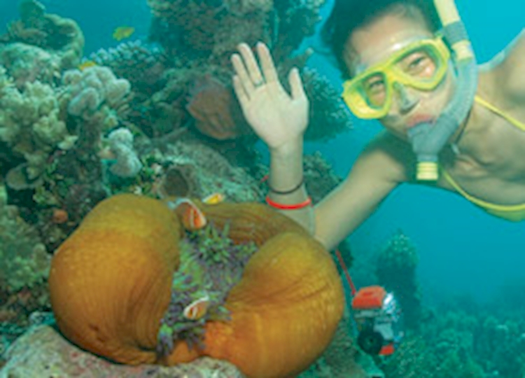 Awesome Whitsundays 3 Day Reef & Whitehaven Package - Sydney Central  Backpackers